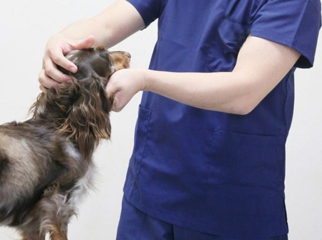 動物病院の原価